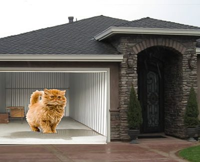 Big cat garage door screen