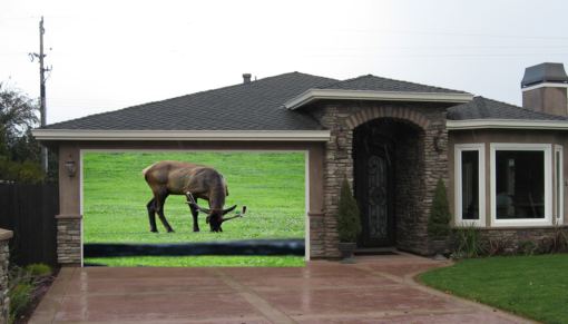 Grazing Elk Screen